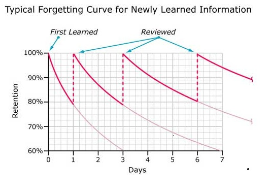 typical-forgetting-chart