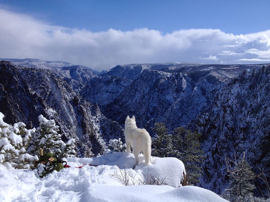dog-adventures-john-stortz-2