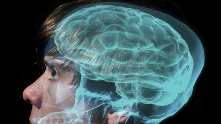 human-brain-power