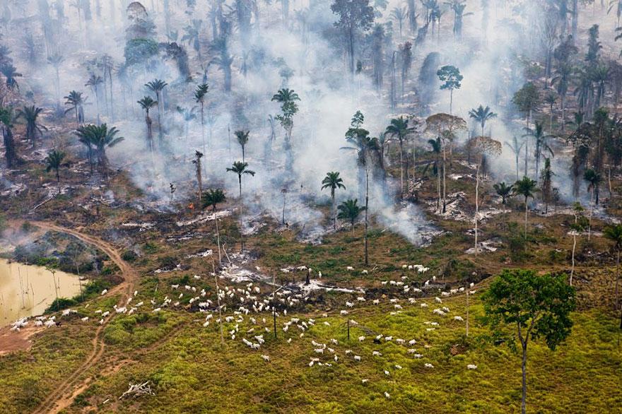 global-population-planet-pollution-overdevelopment-overpopulation-overshoot-8