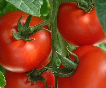 Foods-For-Living-Longer-Tomatoes