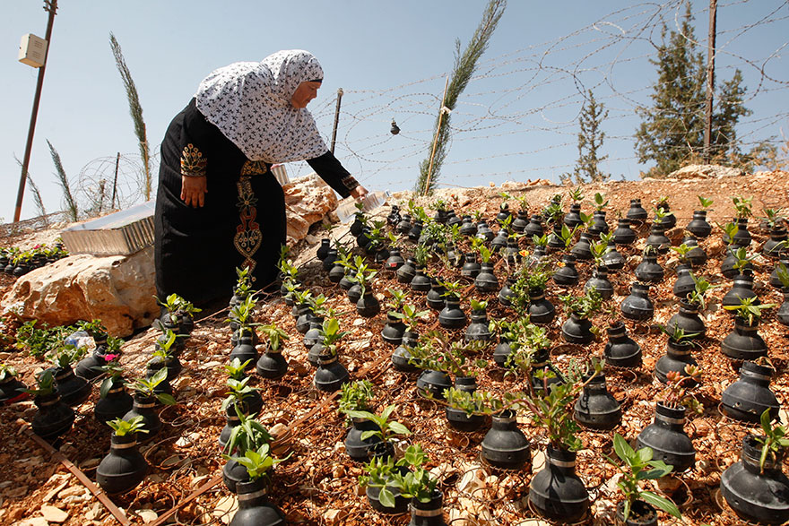 Palestinian-Woman-Plants-Flowers-In-Israeli-Tear-Gas-Grenades