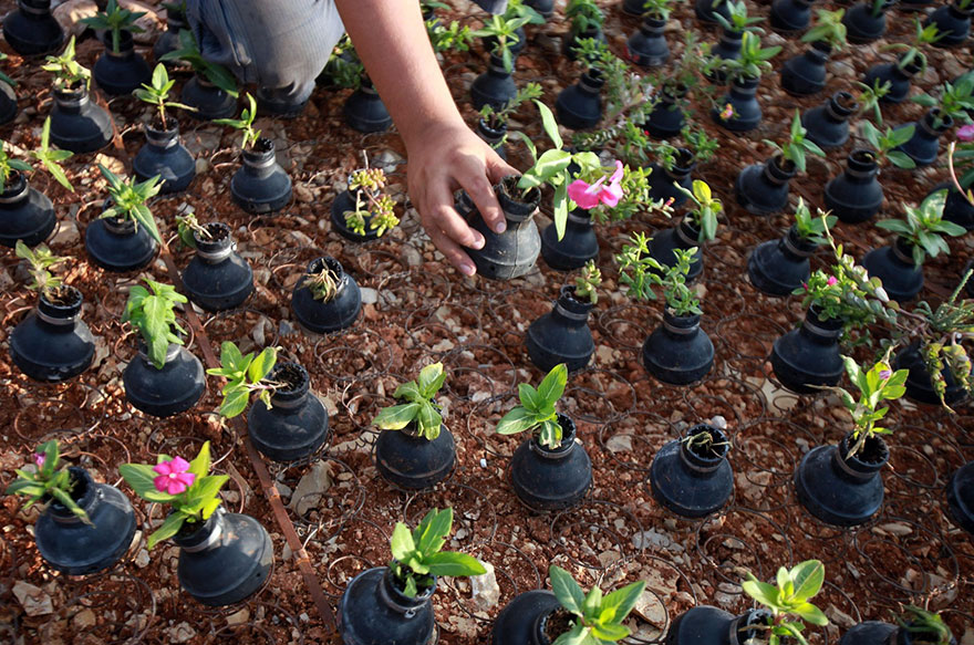 Palestinian-Woman-Plants-Flowers-In-Israeli-Tear-Gas-Grenades-5