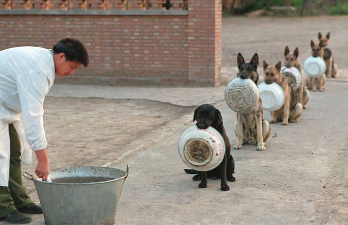 Police-Dogs In-China Waiting-For-Food