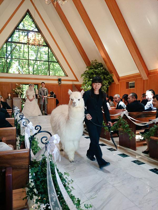 wedding-alpaca-witness-Epinard-Nasu-Hall-japan-1