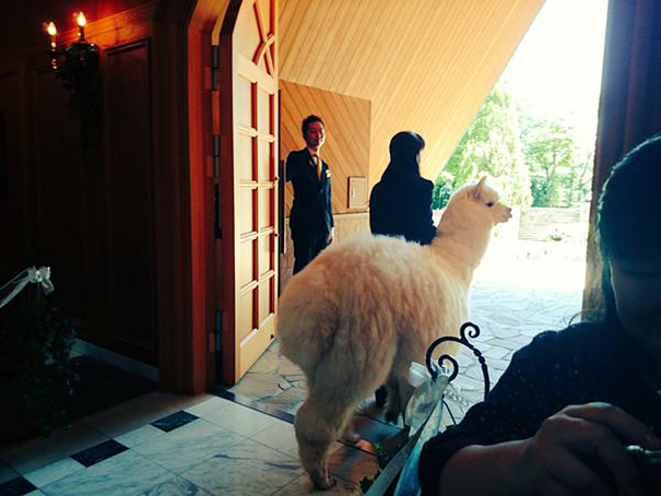 wedding-alpaca-witness-Epinard-Nasu-Hall-japan-3