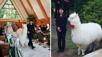 wedding-alpaca-witness-Epinard-Nasu-Hall-japan