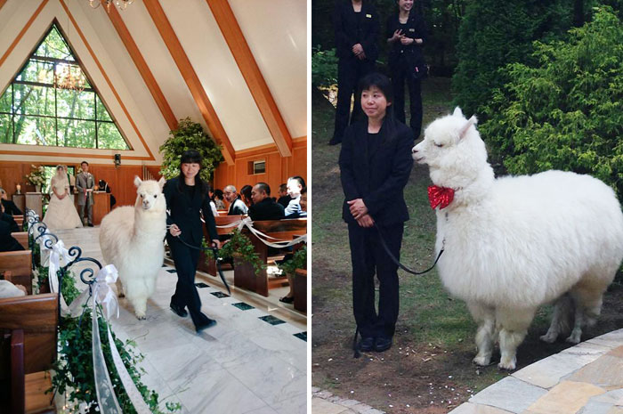 wedding-alpaca-witness-Epinard-Nasu-Hall-japan