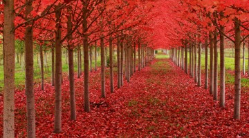 Breathtaking-Fall-Autumn-Images