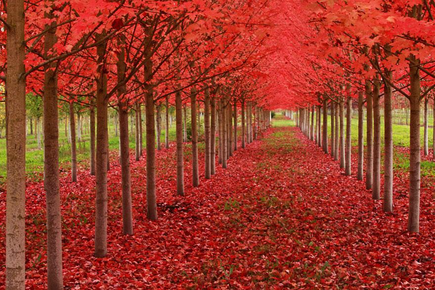 Breathtaking-Fall-Autumn-Images