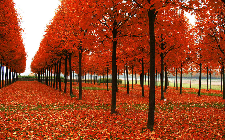 Breathtaking-Fall-Autumn-Images (9)