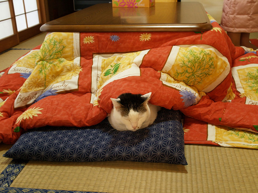 kotatsu-japanese-invention-heating-bed-table