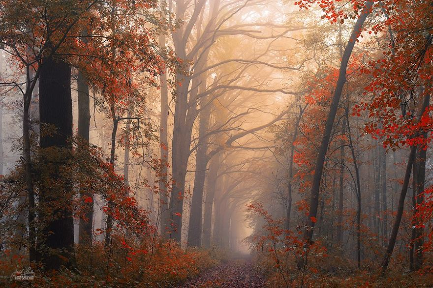 surreal-autumn-forests-photos-janek-sedlar (1)