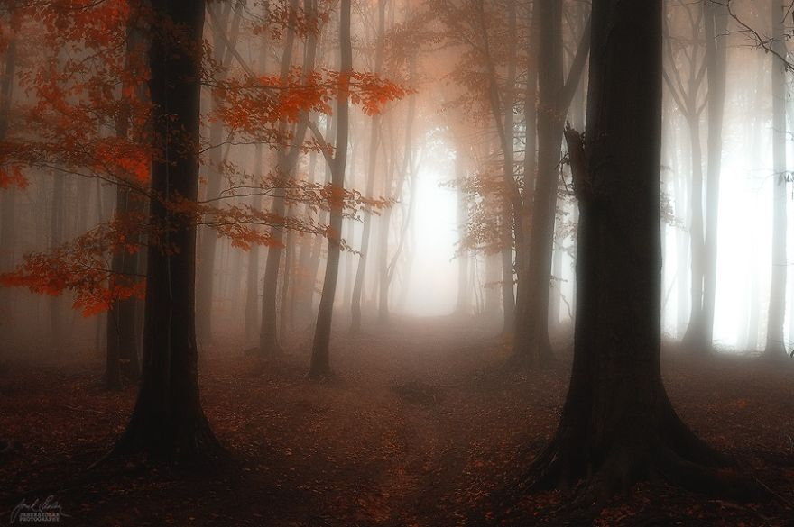 surreal-autumn-forests-photos-janek-sedlar (12)