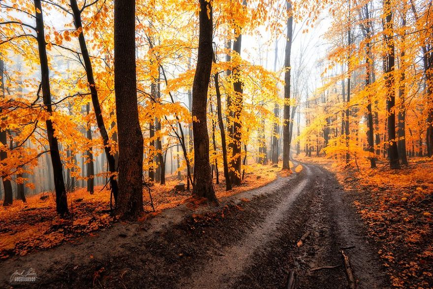 surreal-autumn-forests-photos-janek-sedlar (13)