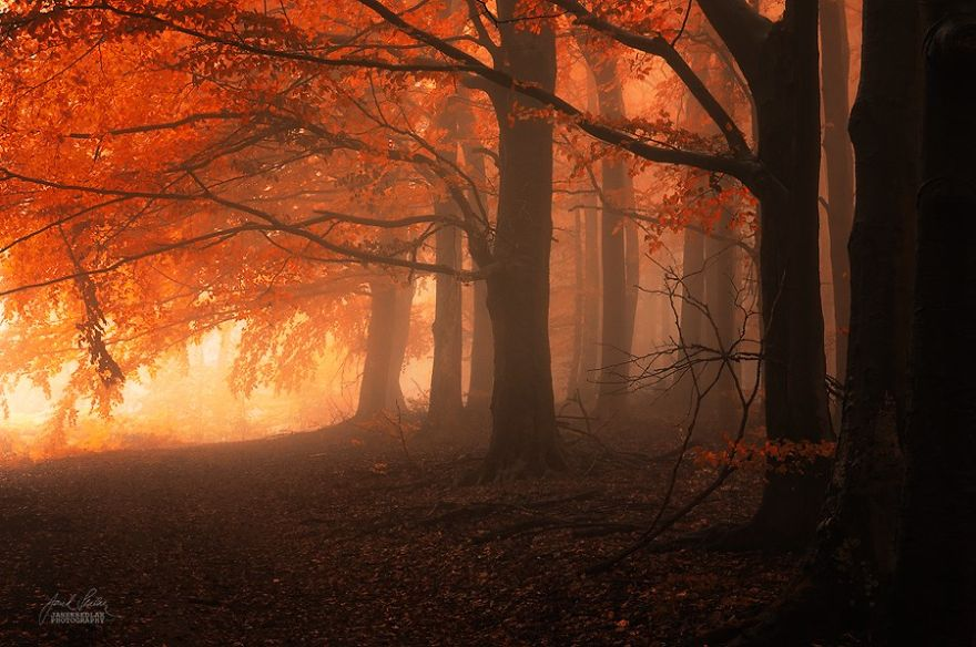 surreal-autumn-forests-photos-janek-sedlar (14)