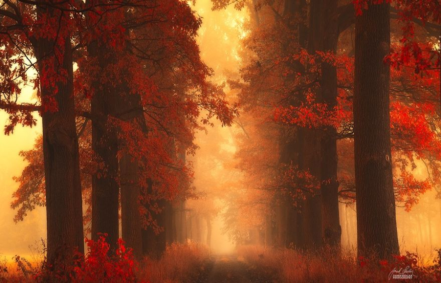 surreal-autumn-forests-photos-janek-sedlar (15)