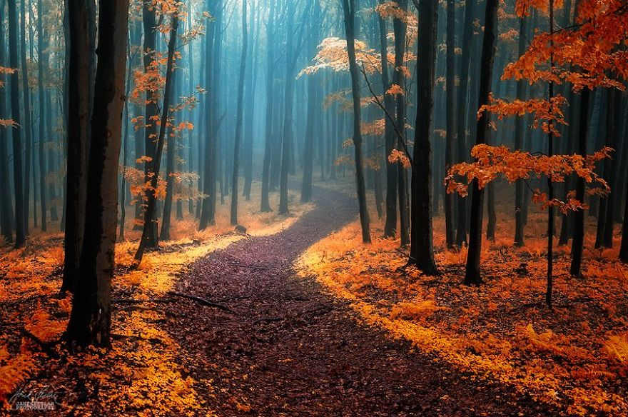 surreal-autumn-forests-photos-janek-sedlar (20)