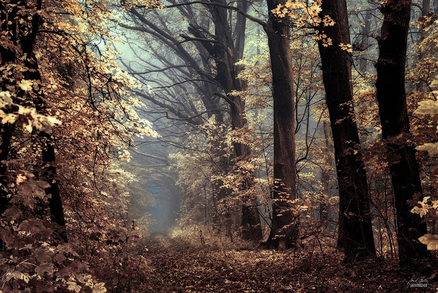 surreal-autumn-forests-photos-janek-sedlar (21)