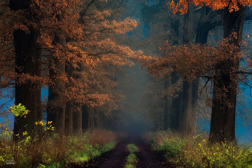 surreal-autumn-forests-photos-janek-sedlar (22)