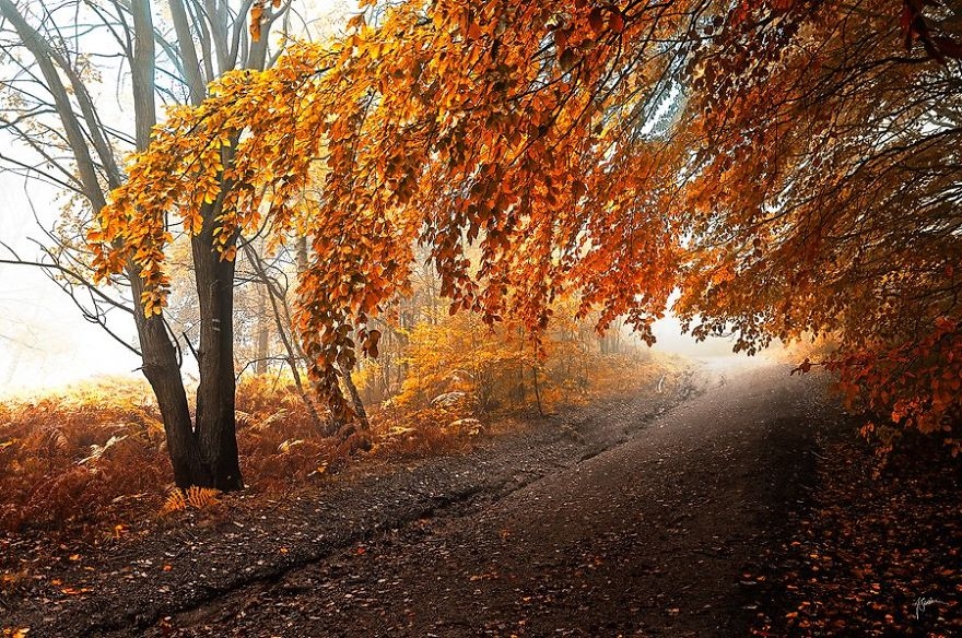 surreal-autumn-forests-photos-janek-sedlar (4)