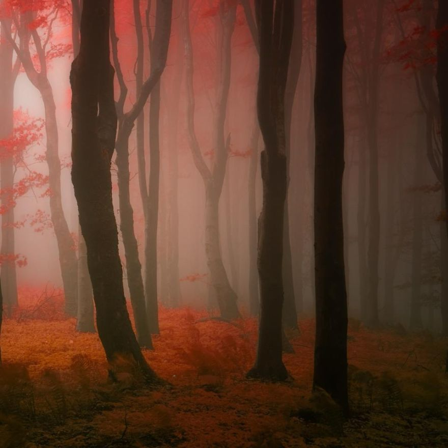 surreal-autumn-forests-photos-janek-sedlar (5)