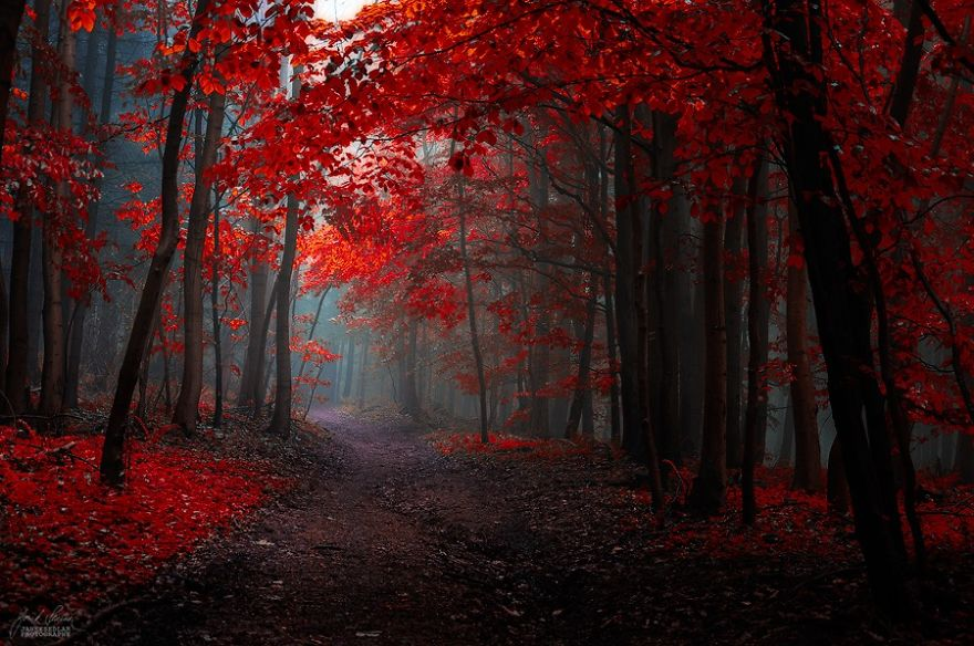surreal-autumn-forests-photos-janek-sedlar