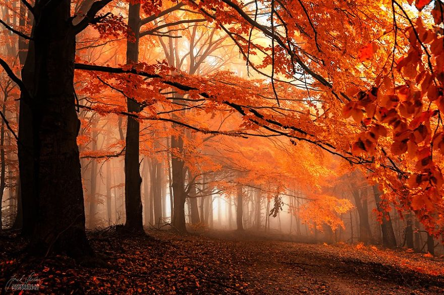 surreal-autumn-forests-photos-janek-sedlar (7)