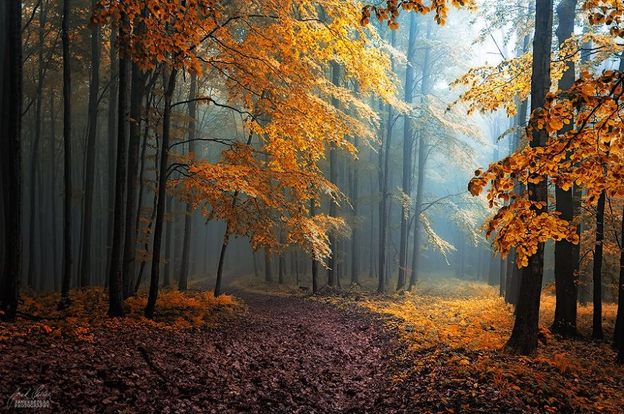 surreal-autumn-forests-photos-janek-sedlar (9)