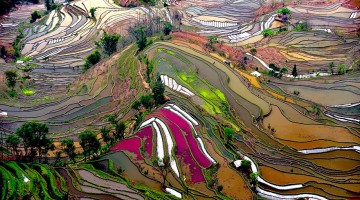 Most-Weird-And-Wonderful-Rice-Fields-Look-Like-Broken-Glass