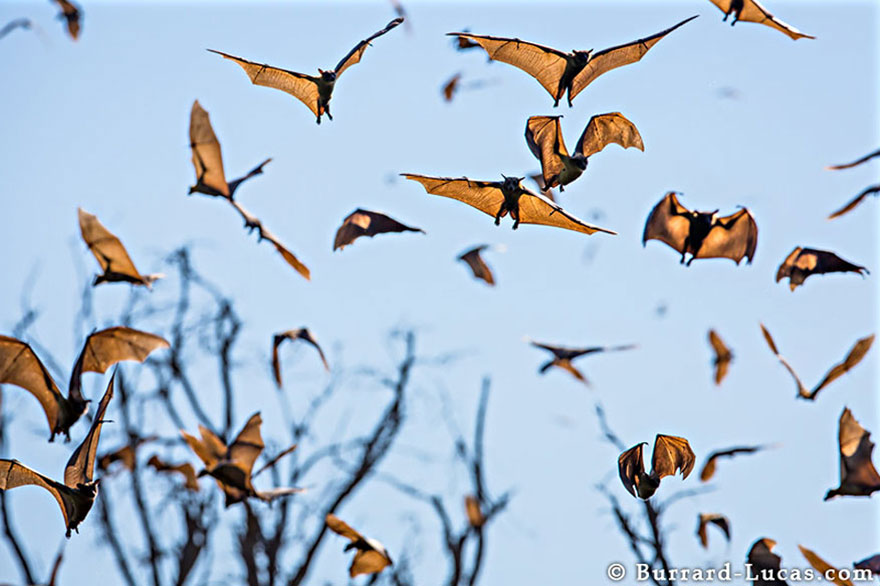 animal-migration-photography (10)