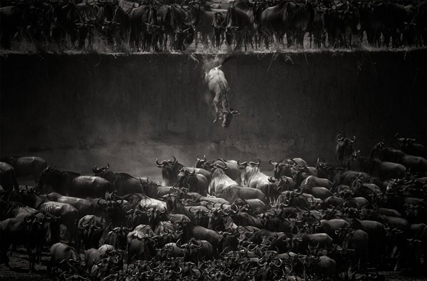 animal-migration-photography (12)