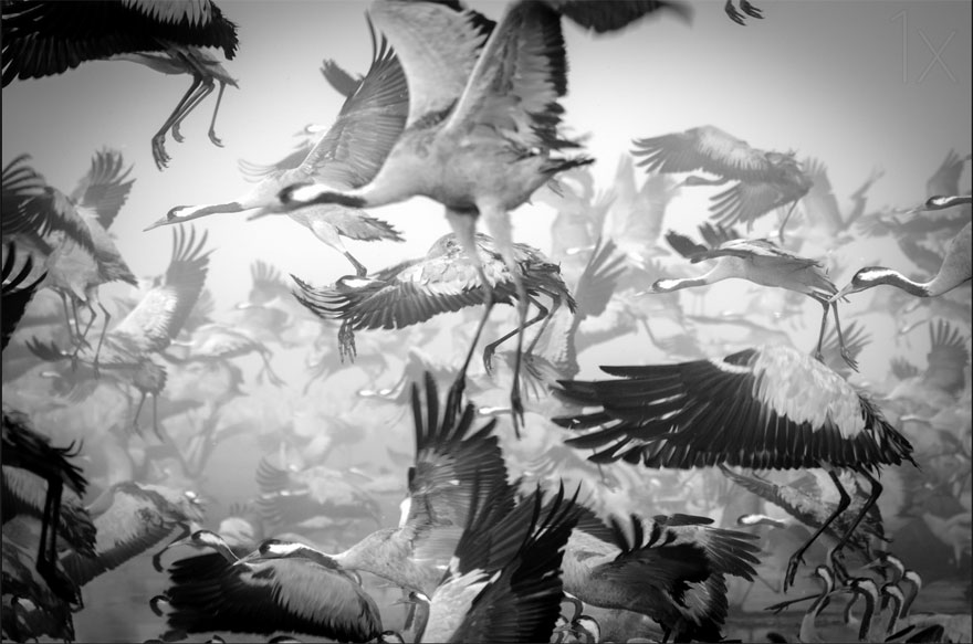 animal-migration-photography