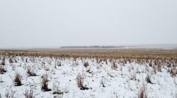 sheep-saskatchewan-field-farms-liezel-kennedy