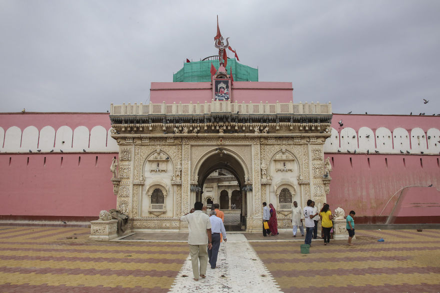 20,000-Holy-Rats-Temple-In-India (3)