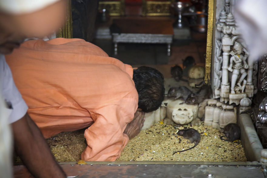 20,000-Holy-Rats-Temple-In-India (6)