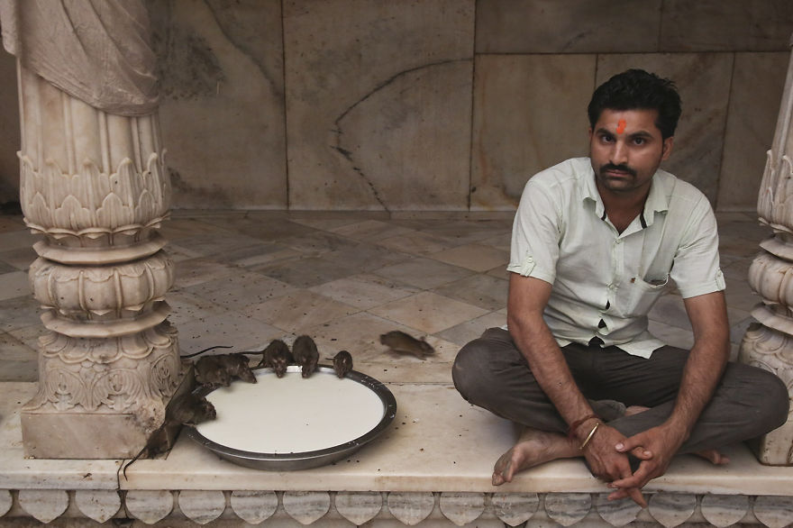 20,000-Holy-Rats-Temple-In-India (8)