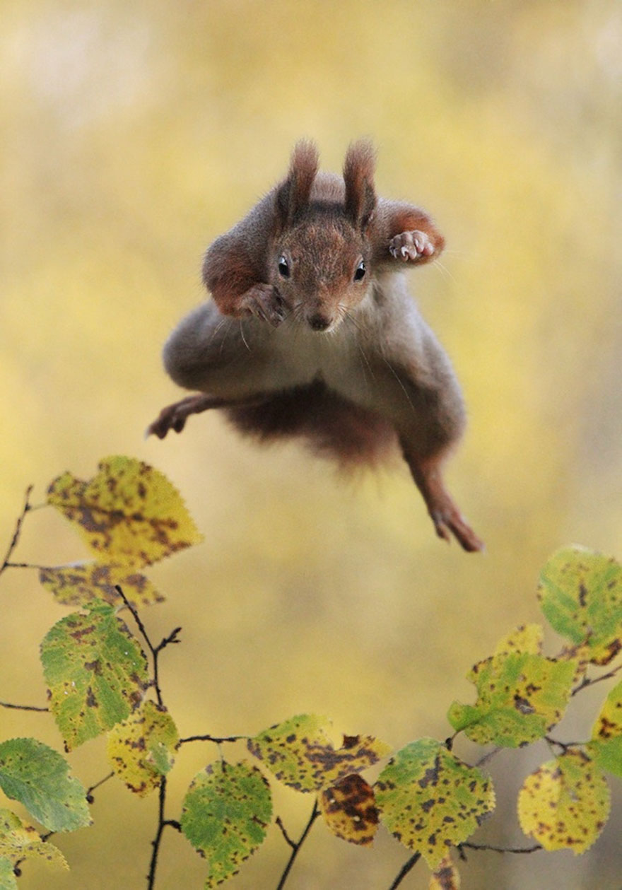 funny-animal-pictures-comedy-wildlife-photography-awards (1)
