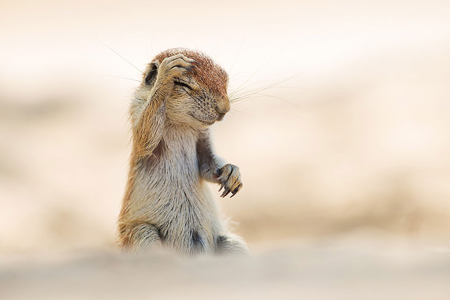 funny-animal-pictures-comedy-wildlife-photography-awards (10)
