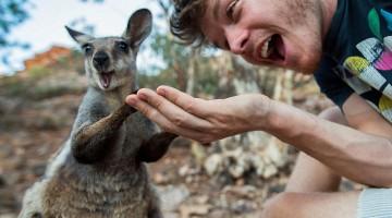 funny-animal-selfies-allan-dixon-art-of-animal-selfies