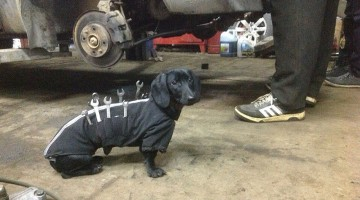 tool-dog-dachshund-suit-auto-mechanic-assistant