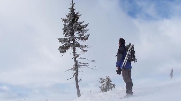 world-oldest-tree-old-tjikko-sweden (5)