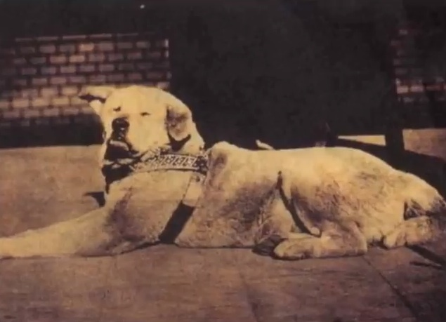 Hachiko – A Dog`s Tale (2)