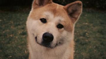 Hachiko-–-A-Dogs-Tale