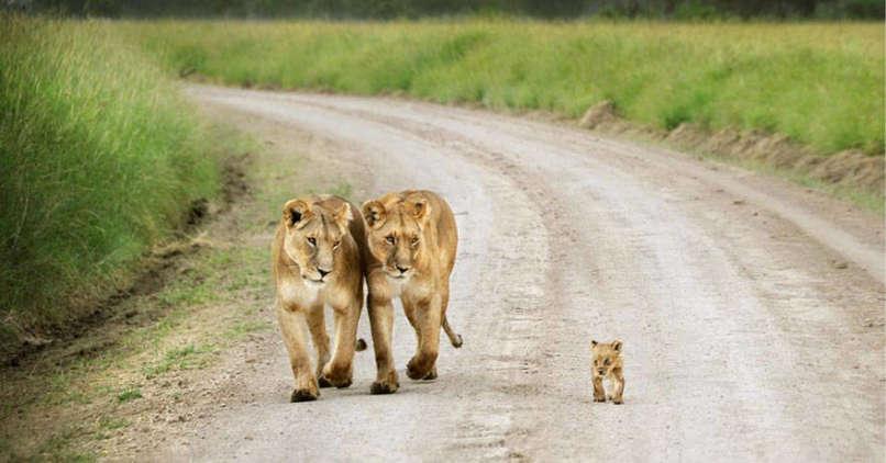 Photos-Prove-Parental-Love-Universal (13)