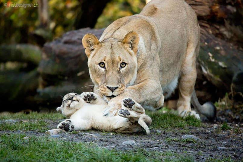 Photos-Prove-Parental-Love-Universal (3)