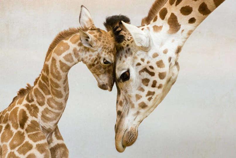 Photos-Prove-Parental-Love-Universal (5)