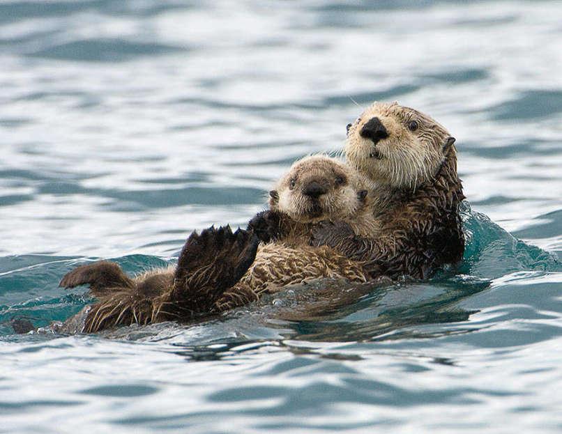 Photos-Prove-Parental-Love-Universal (6)