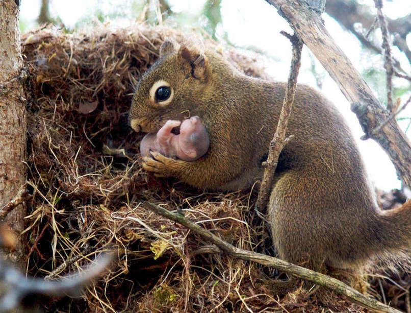 Photos-Prove-Parental-Love-Universal (8)
