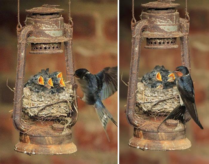 فروش پرنده زیبا عکس های زیبا عکس مادر عکس پرندگان حیوانات زیبا و دوست داشتنی حس زیبا